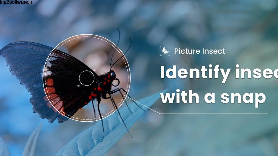 Picture Insect – Bug Identifier 2.2 شناسایی حشرات مخصوص اندروید